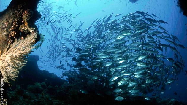Des plongées sélectionnées sur des sites magnifiques sur les sites de Candidasa, Nusa Penida et Nusa Lembongan, en Indonésie