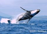 Rencontre exceptionnelle avec les requins baleine et les baleines à bosse à Nosy Be - voyages adékua