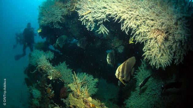 Découvrez les fonds marins des Philippines, sur l'archipel des Visayas