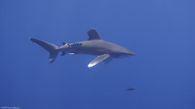 Plongez avec les plus belles espèces sous-marines de mer Rouge
