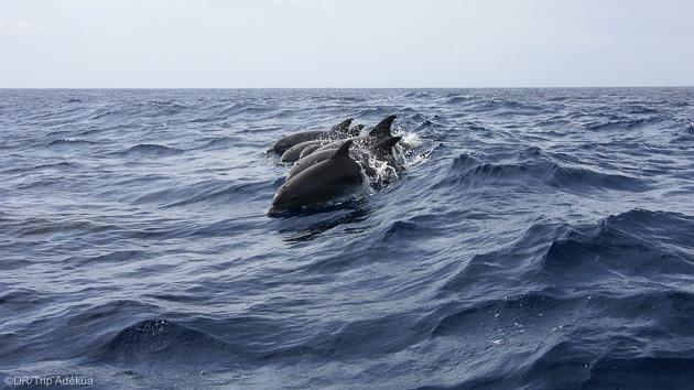 Des plongées inoubliables pendant votre séjour en Martinique