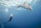 Les célèbres récifs des Fury Shoals comme terrain de jeu - voyages adékua