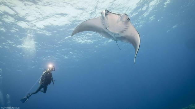 Des immersions inoubiables en mer Rouge