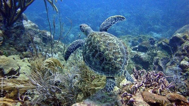 Magnifique séjour plongée à Tobago dans les Caraïbes