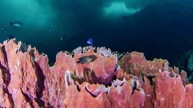 Magnifiques sites de plongée au départ de Speyside, à Tobago