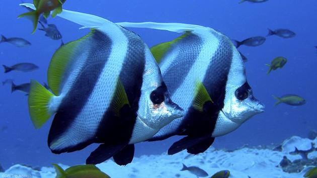 Plongez avec les plus belles espèces du Mozambique