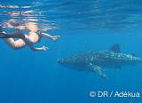 Plongées en famille et rencontre avec les requins baleine et les baleines à bosse à Nosy Be - voyages adékua