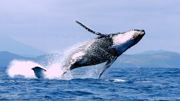 nager avec les baleines à Madagascar