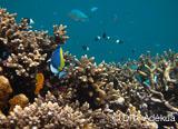 Les merveilles sous-marines de Nosy Be dans un séjour 100% plongée - voyages adékua