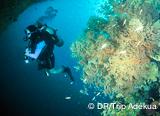 Vos plongées: épaves, lac Barracuda et tombants vertigineux d'Apo Reef - voyages adékua