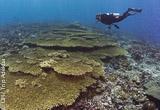Le meilleur de la plongée du Triangle de Corail - voyages adékua