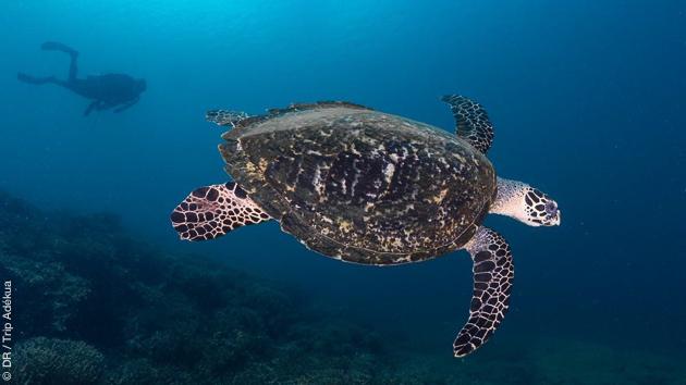 Sur les superbes sites de plongées de Rapopo et de Tufi, entre épaves et faune diversifiée pour le plaisir de tous