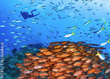 La Papouasie Nouvelle Guinée, le meilleur de la plongée du Triangle de Corail - voyages adékua