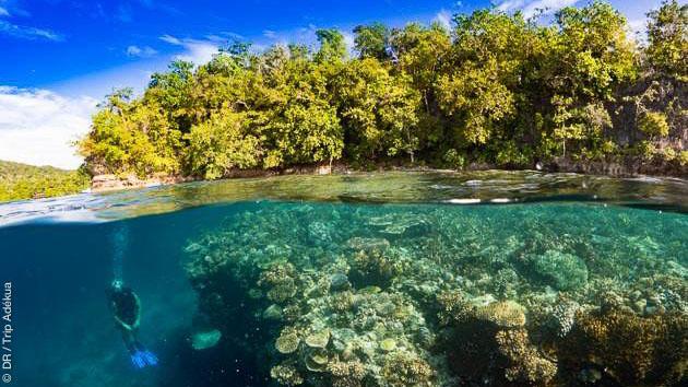 Vacances plongée entre Tawali et Tufi, en Papouasie Nouvelle Guinée