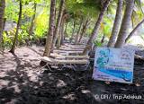 Votre programme de 8 jours et 7 nuits, à la découverte des fonds de la Mer des Caraïbes - voyages adékua