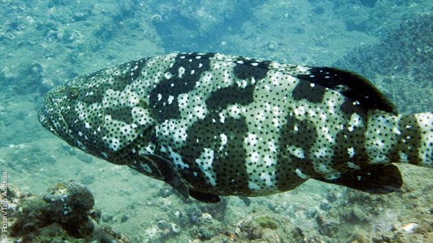 quelques belles espèces de poisson à découvrir pendant vos vacances plongées au Vietnam