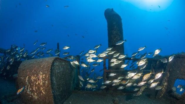 Plongez à la découverte des fonds marins de l'archipel de Madère