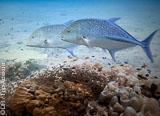 Décor de rêve à La Digue aux Seychelles pour votre voyage plongée - voyages adékua