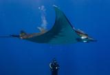 Votre séjour en compagnie de votre Trip Leader Dive Trip Adékua - voyages adékua
