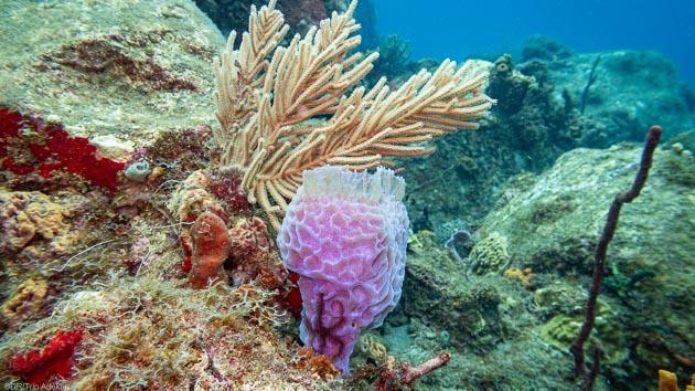 Votre séjour plongée à la découverte des plus beaux fonds marins de Guadeloupe