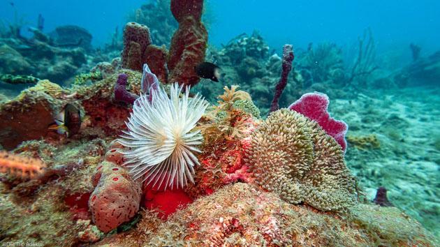 Profitez d'un séjour plongée de rêve en mer des Caraïbes