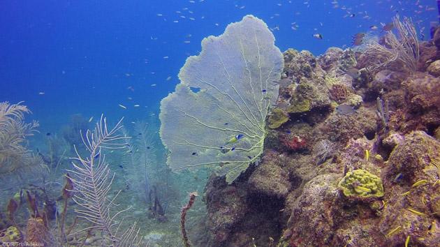 Découvrez les plus beaux sites de plongée de Guadeloupe