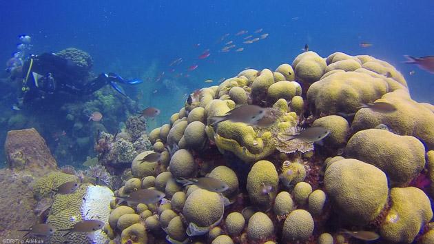 Un séjour de rêve pour découvrir les espèces sous-marines de la Guadeloupe