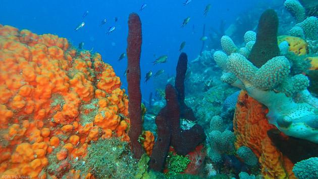 Plongez à la Dominique à la découverte de la mer des Caraïbes