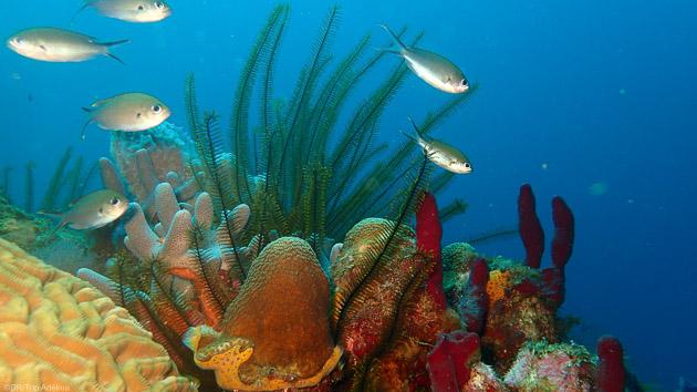 Découvrez les plus beaux spots de plongée de la Dominique