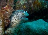 Sous l'eau pendant vos plongées au Cap Vert : reliefs volcaniques, faune tropicale et Atlantique - voyages adékua