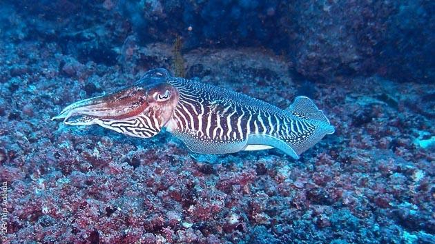 Faune sous marine tropicale, reliefs, tombants.... vous attendent lors des plongées au Cap Vert