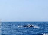 Au Cap Vert, une myriade d'activités pour vos vacances - voyages adékua