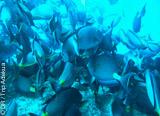 8 immersions à Sal avec encadrement francophone - voyages adékua