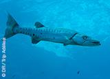 Plongez sur les spots sauvages des Bahamas - voyages adékua