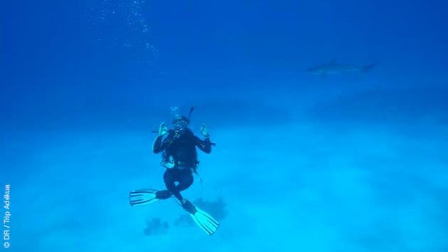 Vos plongées aux Bahamas en toute sécurité vous permettront peut être de rencontrer des requins