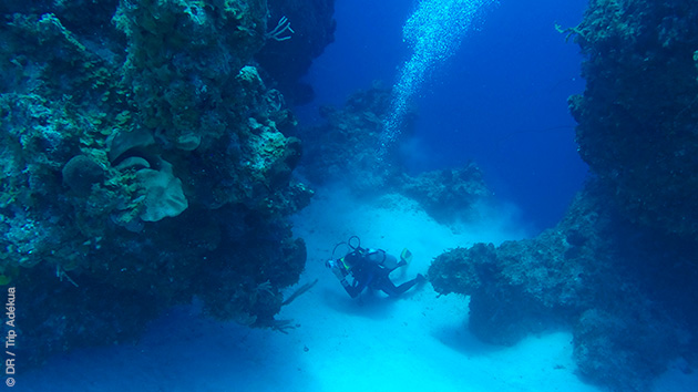 Vacances plongées dans les eaux des Caraïbes, aux Bahamas