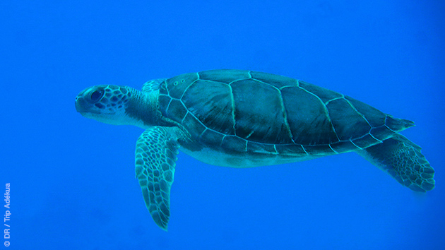 Découvrez la faune sous-marine des Caraïbes lors de ce séjour plongée aux Bahamas : barracudas, tortues ou même requins parmi les gros...