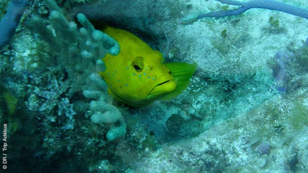 Sur les spots autour de Cat Island, vos plongées vous réservent de belles rencontres, dans les coraux et les récifs