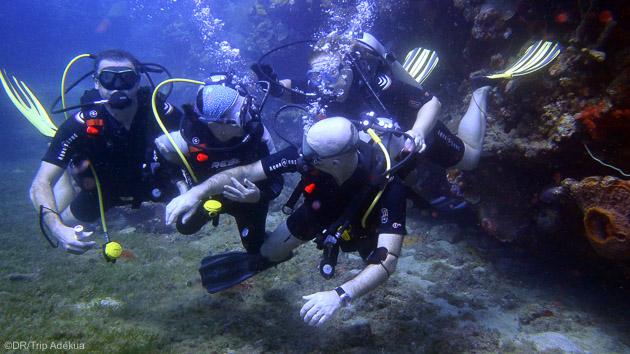 Des immersions inoubliables dans les eaux de La Dominique