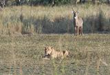 Le parc national de Gorongosa vous ouvre ses portes  - voyages adékua