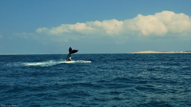 Votre séjour exceptionnel au Mozambique entre plongée et safari