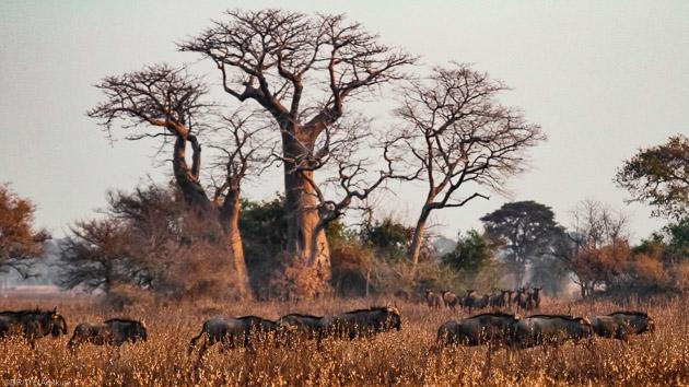 Venez découvrir la faune et la flore terrestre et marine du Mozambique