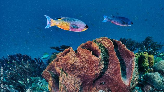Plongez au milieu des raies, tortues et autres poissons des Caraïbes