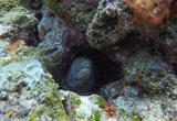 Les plus beaux sites de plongée de l'île Maurice - voyages adékua