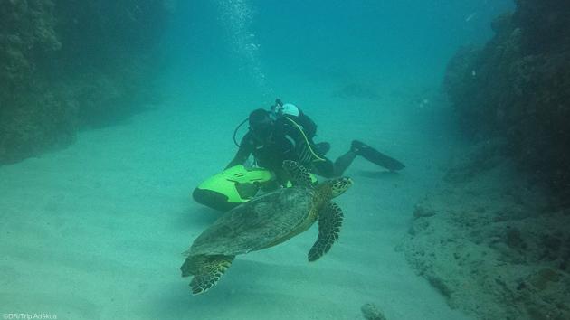 Un séjour plongée de rêve sur l'île Maurice