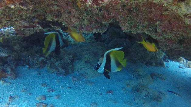 Plongez dans les eaux de l'Océan Indien