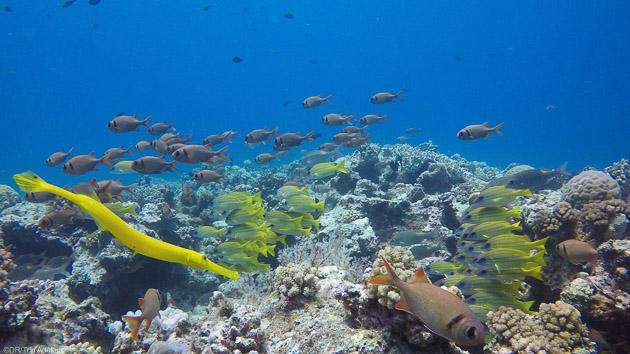 Découvrez les plus belles espèces marines de l'Océan Indien