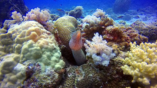 Votre séjour plongée à petit prix sur l'île Maurice