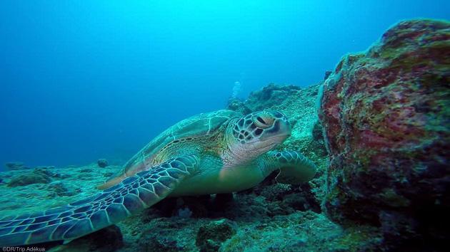 Les plus belles immersions de l'Océan Indien