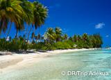 Le top de la plongée en Polynésie Française: Tahiti, Rangiroa, Fakarava - voyages adékua